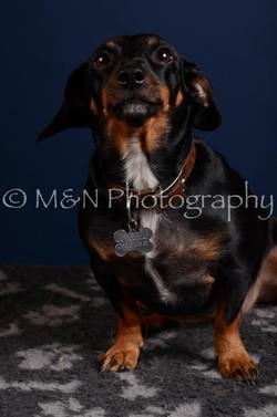 M&N Photography -DSC_4095
