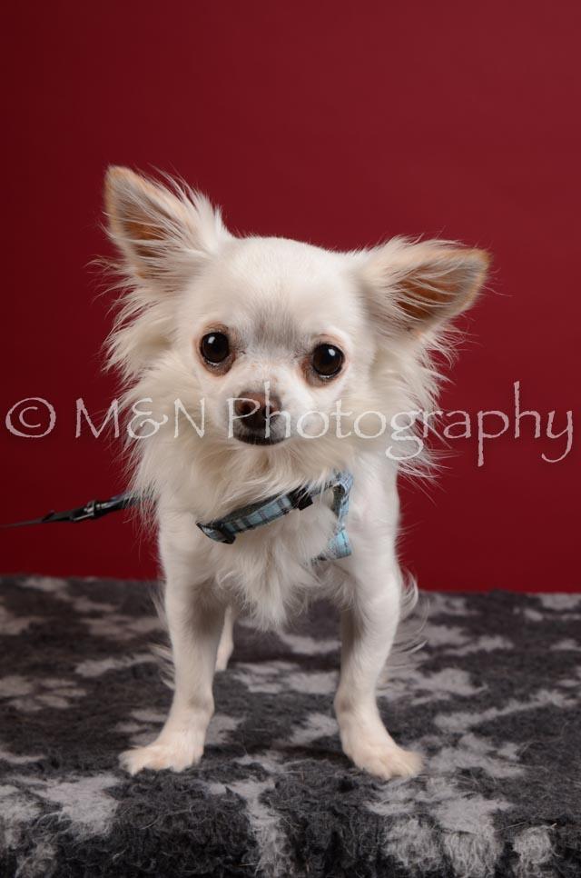 M&N Photography -DSC_3351