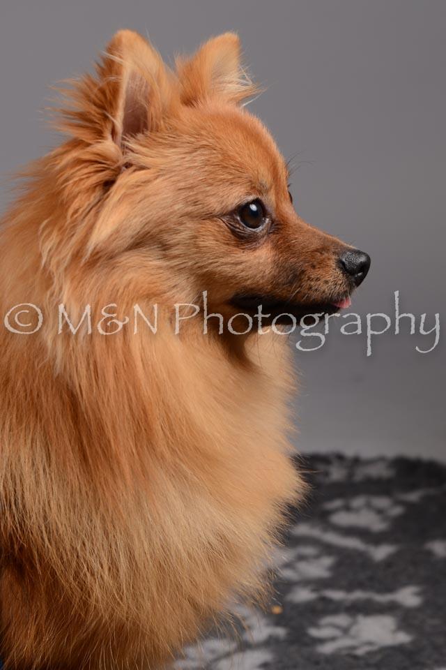 M&N Photography -DSC_2444