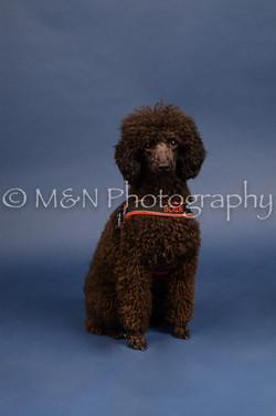 M&N Photography -DSC_3968