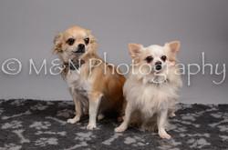 M&N Photography -DSC_2907