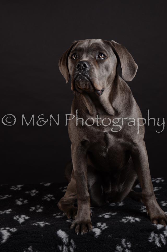 M&N Photography -DSC_5585