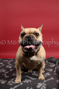 M&N Photography -DSC_8478