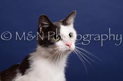 M&N Photography -IMG_4483