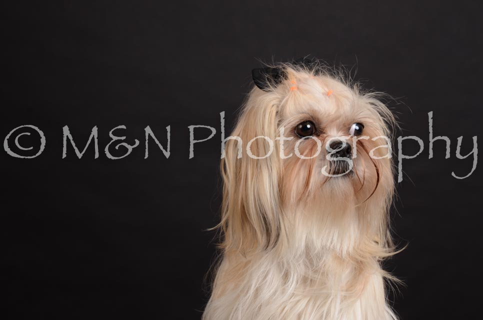 M&N Photography -DSC_5723