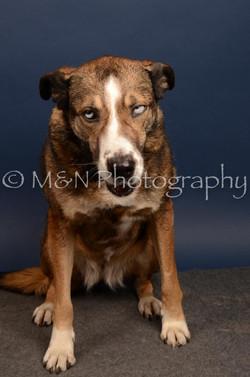 M&N Photography -DSC_4502
