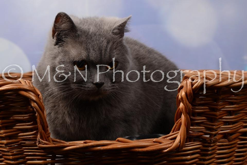 M&N Photography -DSC_6983