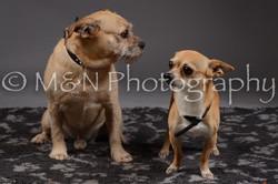 M&N Photography -DSC_2173