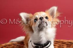 M&N Photography -DSC_8608