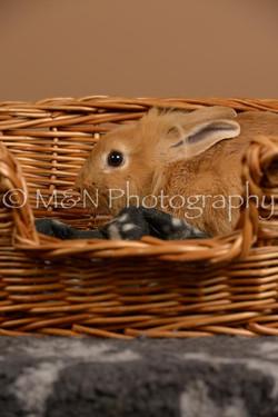 M&N Photography -_SNB0953