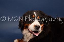 M&N Photography -DSC_3807