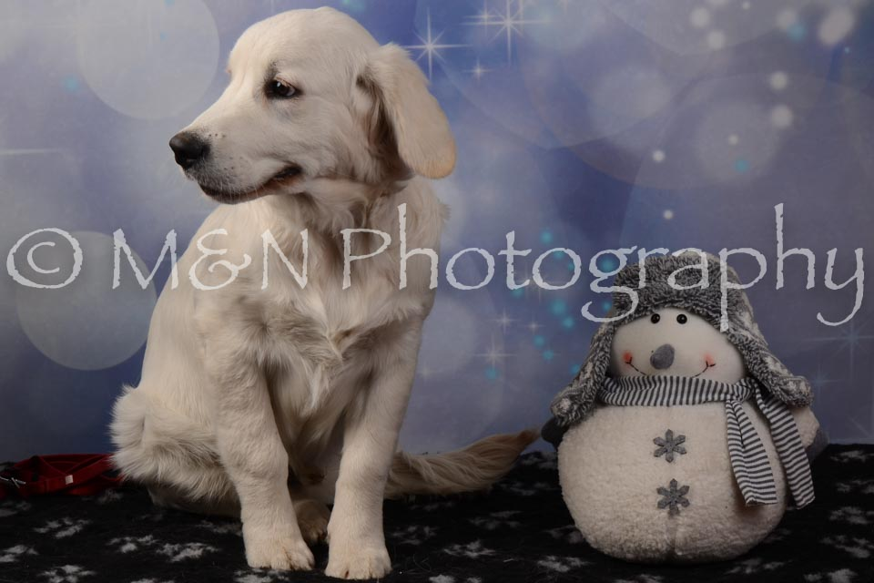 M&N Photography -DSC_7095