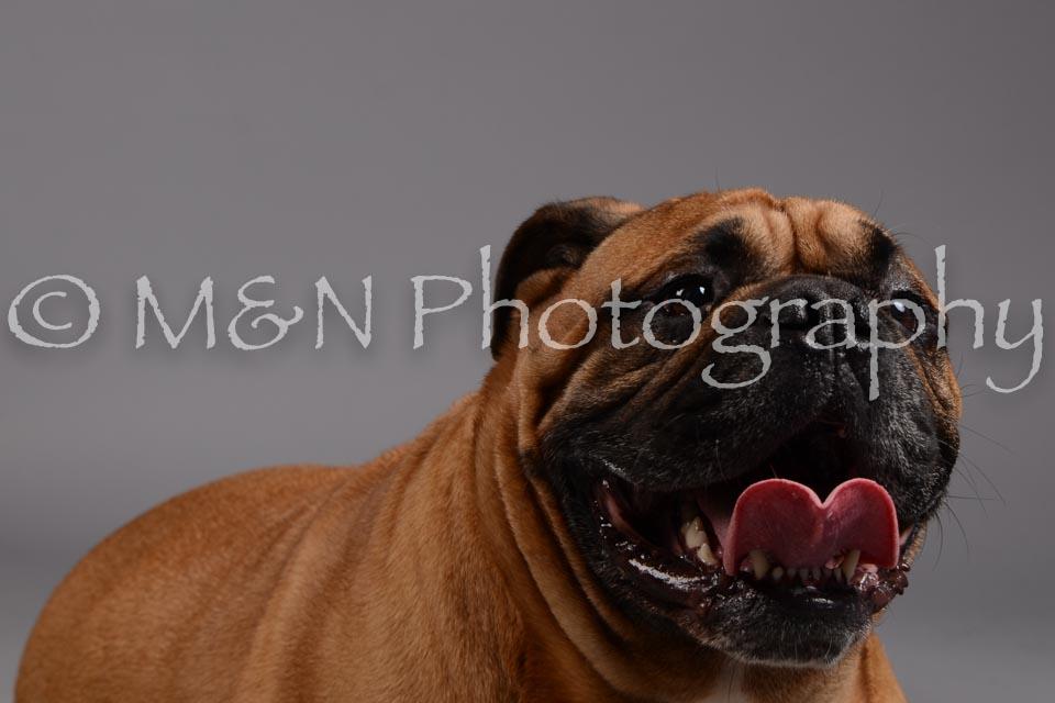 M&N Photography -DSC_1698