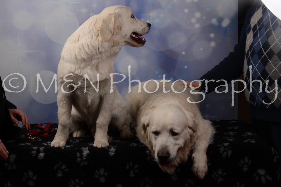 M&N Photography -DSC_7102