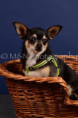 M&N Photography -IMG_4499