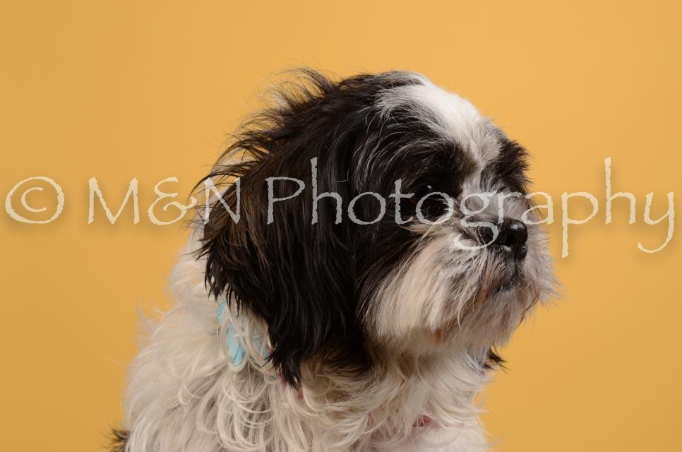 M&N Photography -DSC_4699