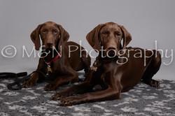 M&N Photography -DSC_2599