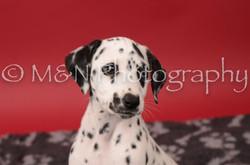 M&N Photography -DSC_6801