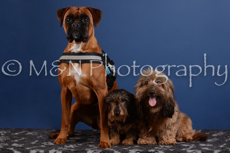 M&N Photography -DSC_5255