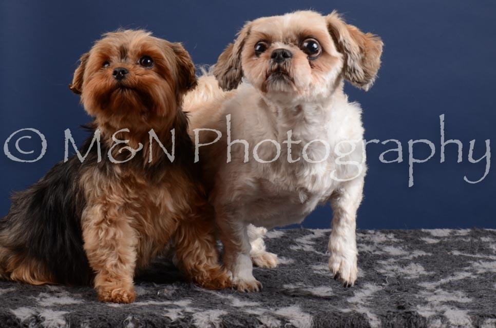 M&N Photography -DSC_4004