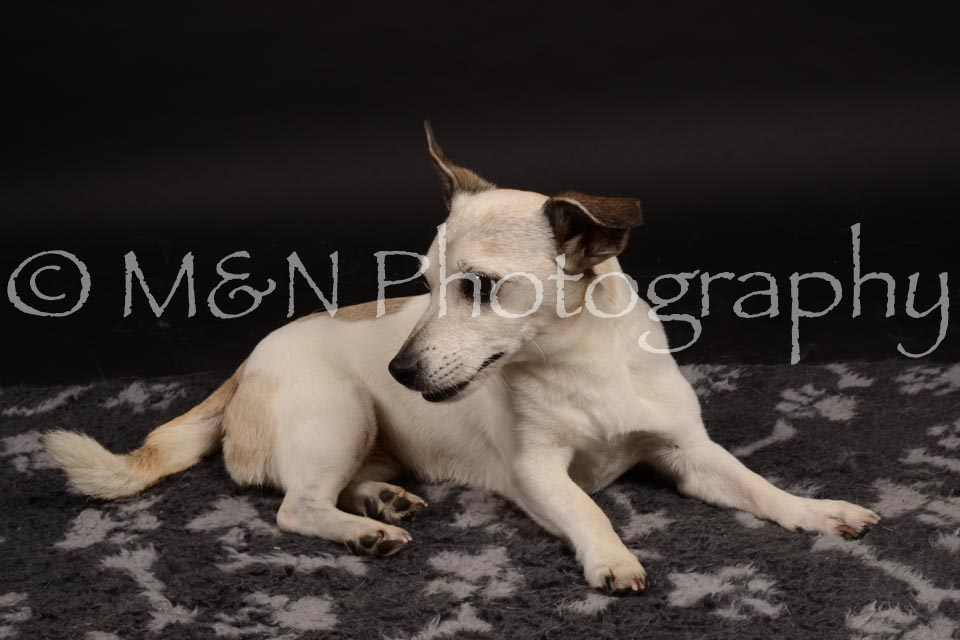 M&N Photography -DSC_0104