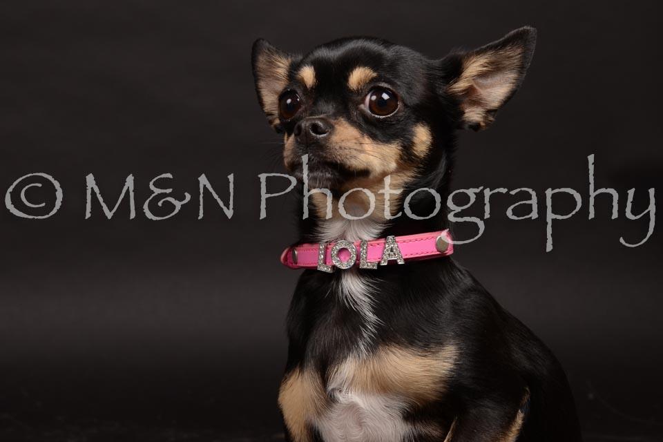 M&N Photography -DSC_0125