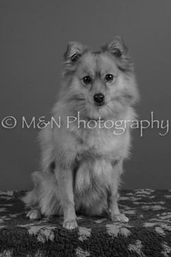 M&N Photography -DSC_5372-2