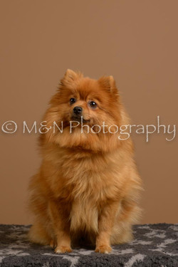 M&N Photography -_SNB0888