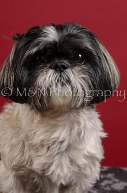 M&N Photography -DSC_3590