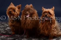 M&N Photography -DSC_0424