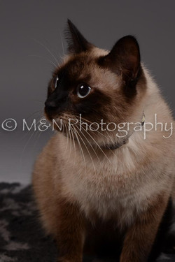 M&N Photography -DSC_2261