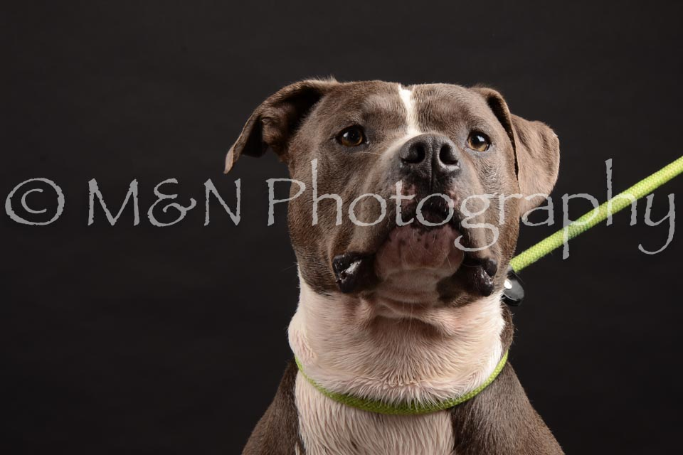 M&N Photography -DSC_0082