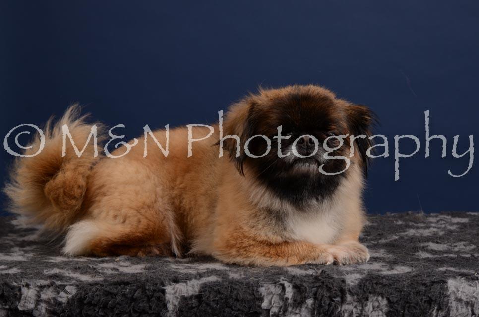 M&N Photography -DSC_4148