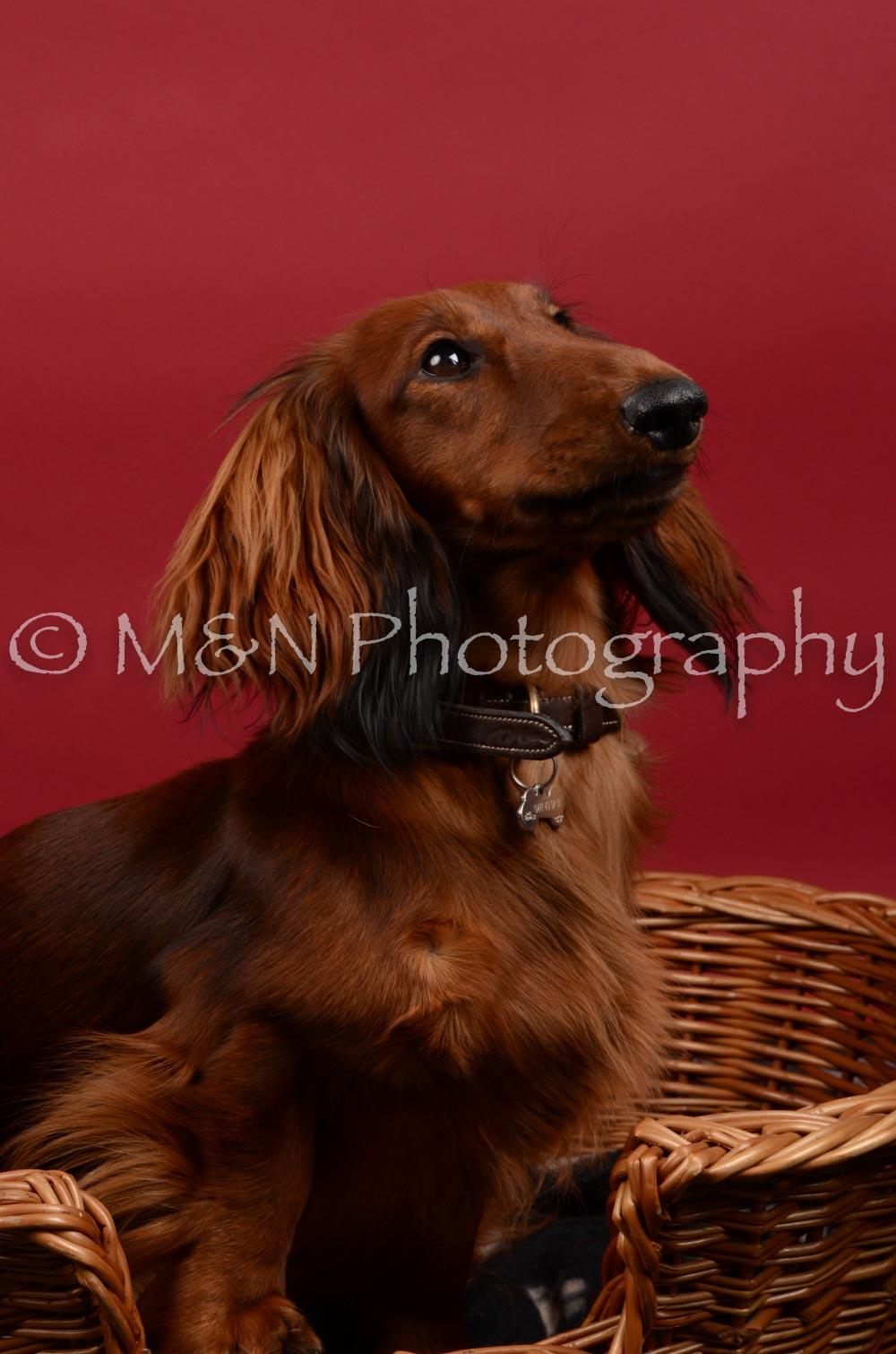 M&N Photography -DSC_8534