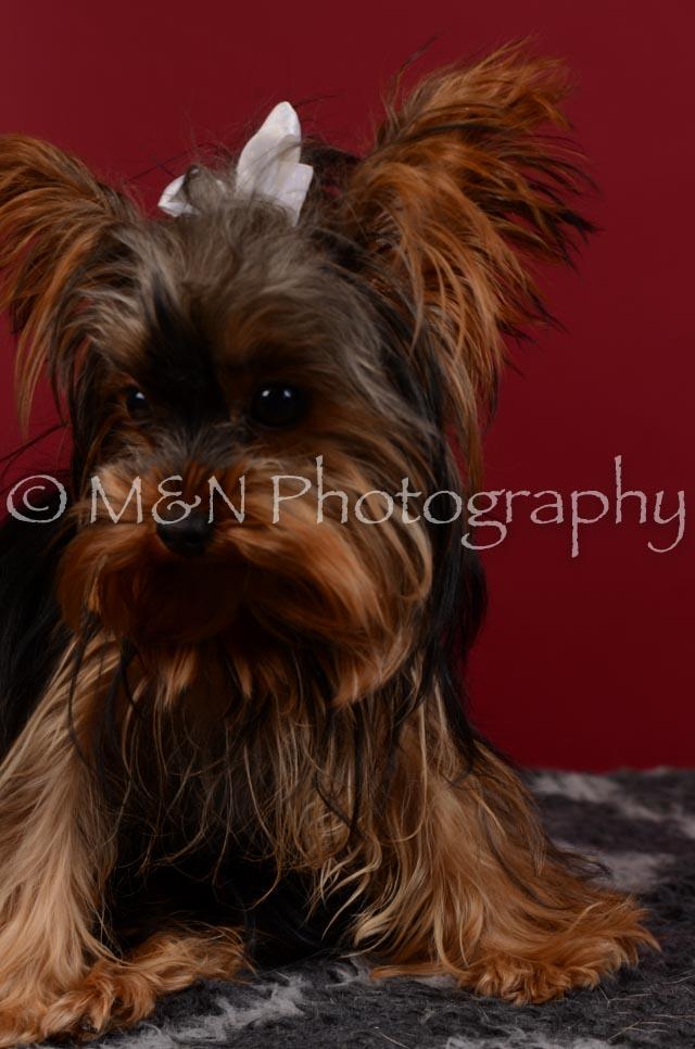 M&N Photography -DSC_3335