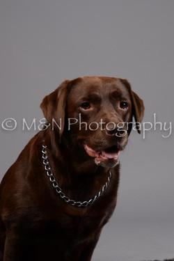 M&N Photography -DSC_2527