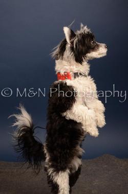 M&N Photography -DSC_4462