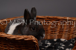 M&N Photography -DSC_2206
