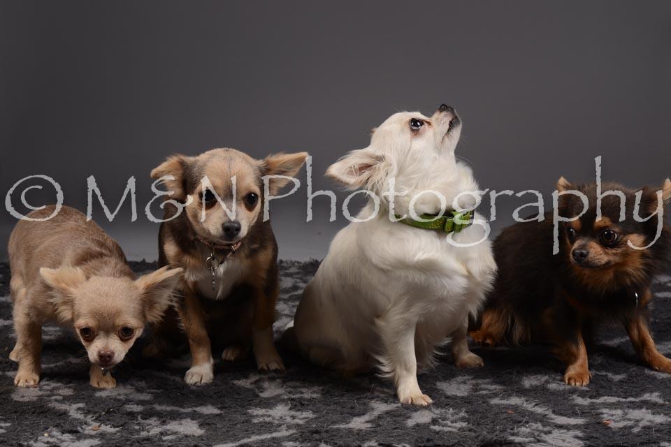 M&N Photography -DSC_2244