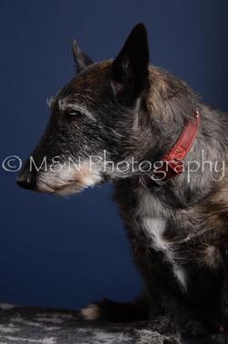 M&N Photography -DSC_3885