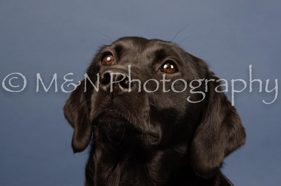 M&N Photography -DSC_4340