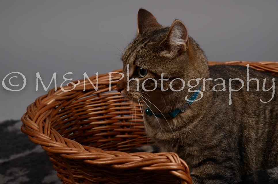 M&N Photography -DSC_2939