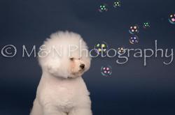 M&N Photography -DSC_3900
