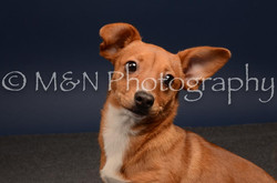 M&N Photography -DSC_4573