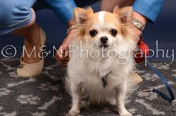 M&N Photography -DSC_0585