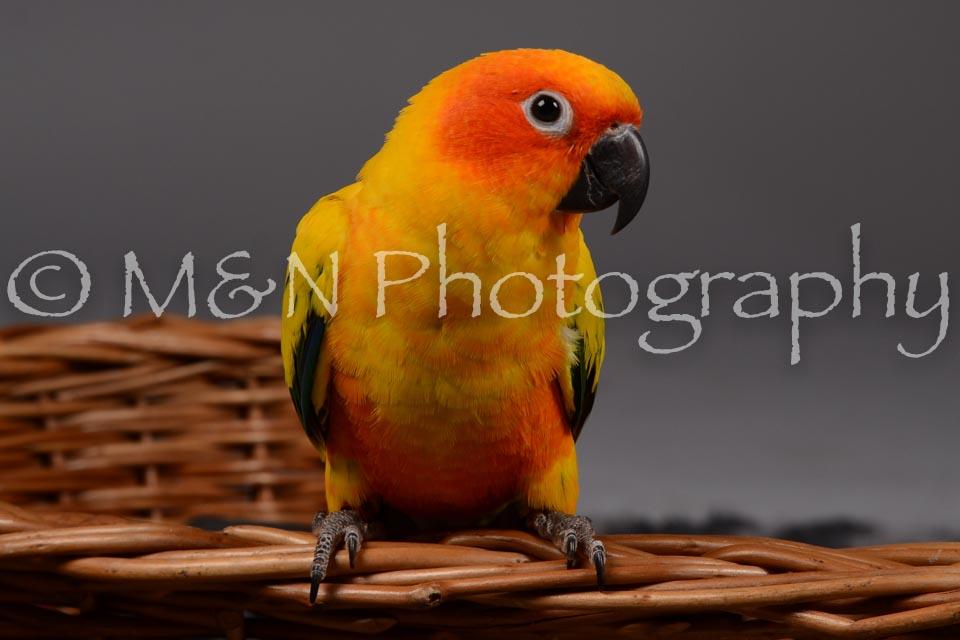 M&N Photography -DSC_2123