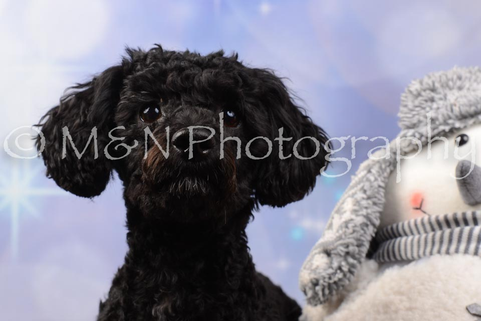 M&N Photography -DSC_6880