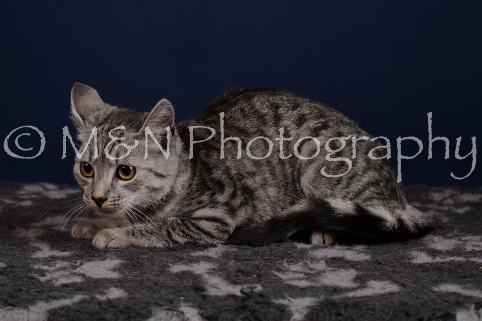 M&N Photography -DSC_4264
