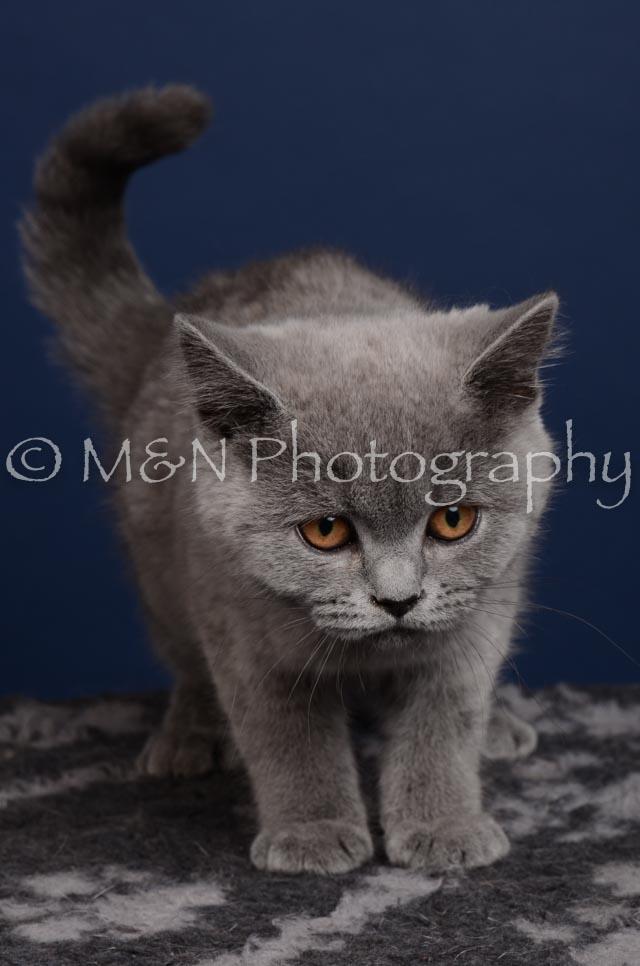 M&N Photography -DSC_4277