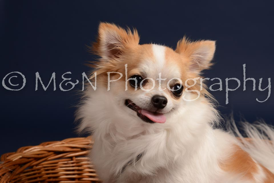 M&N Photography -DSC_0591